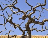 分支被扭转的结构树 免版税库存图片