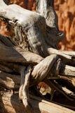 分支被扭转的结构树 免版税图库摄影