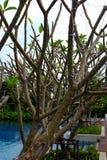 分支结构树 图库摄影
