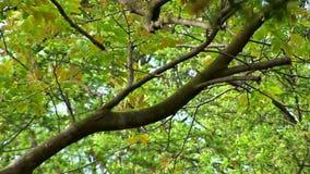 分支结构树 影视素材