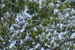 分支结构树 免版税库存图片