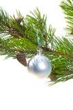 分支cristmas点缀绿色杉木 图库摄影