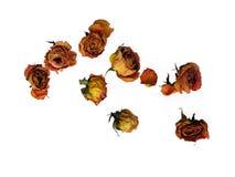 分散的50朵干燥玫瑰 免版税库存图片