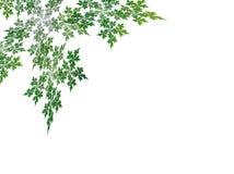 分数维绿色叶子 皇族释放例证