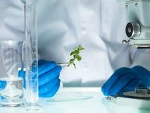 分析一棵植物在实验室里 免版税图库摄影