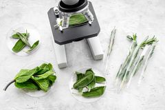 分析食物概念 健康产品 草本迷迭香,薄菏在灰色背景顶视图的显微镜下 库存照片