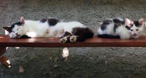 分泌乳汁猫在长凳睡觉在小猫旁边 免版税库存照片