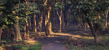 分流在森林的足迹 免版税库存图片