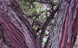 分流的树枝 免版税库存图片