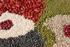分类豆豆类 图库摄影