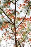 分行、叶子和花 免版税图库摄影