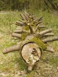 分行中断了结构树 免版税图库摄影