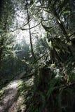 分行交叉形成的剪影结构树 库存图片