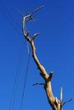 分行停止的结构树 免版税库存照片