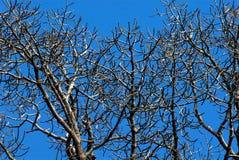 分行停止的结构树 免版税图库摄影