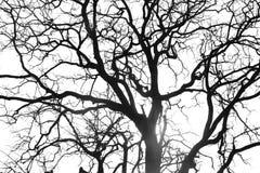 分行停止的结构树 库存图片
