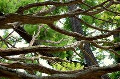 分行停止的结构树 库存照片