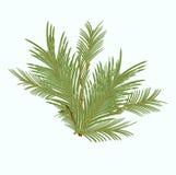 分行冷杉绿色被日光照射了结构树 免版税库存照片
