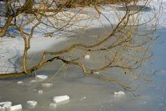 分行冻结的池塘结构树 免版税库存照片