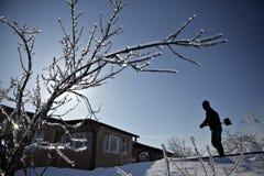 分行冻结的结构树 图库摄影