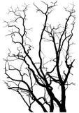 分行剪影结构树 免版税库存图片