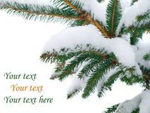分行包括冷杉雪结构树 免版税图库摄影