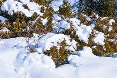 分行包括雪结构树 库存照片