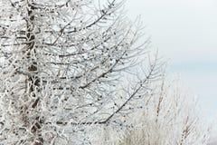 分行包括雪 免版税图库摄影