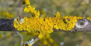 分行包括青苔结构树 充满活力的绿色抽象看法  免版税库存照片