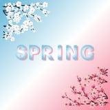 分行叶子绿色例证春天向量字 樱花 下雨 免版税库存图片