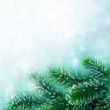 分行圣诞树 免版税图库摄影