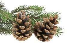 分行圣诞节查出的结构树白色 库存图片