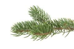 分行圣诞节查出的结构树白色 免版税库存图片
