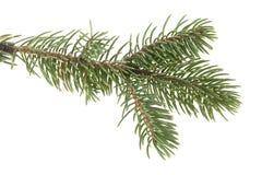 分行圣诞节查出的结构树白色 库存照片
