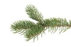 分行圣诞节查出的结构树白色 免版税库存照片
