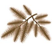 分行圣诞节毛皮结构树 库存照片