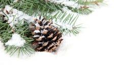 分行圣诞节锥体杉树 免版税库存照片