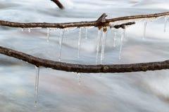 分行在流结构树冬天附近的冻结的冰柱山本质 冬天本质 免版税库存图片