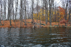 分行在结构树的划分为的停止的湖 免版税库存图片