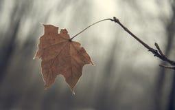 分行干燥叶子 库存照片