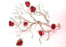 分行干燥玫瑰 库存图片