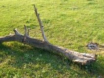 分行干燥结构树 库存照片