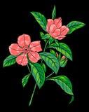 分行开花的粉红色 库存照片