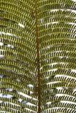 分行接近的蕨 图库摄影