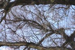 分行明亮的开花的绿色本质春天结构树 叶子和灌木与第一片绿色叶子 免版税库存图片