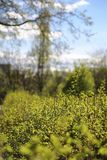 分行明亮的开花的绿色本质春天结构树 叶子和灌木与第一片绿色叶子 库存照片