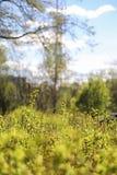 分行明亮的开花的绿色本质春天结构树 叶子和灌木与第一片绿色叶子 免版税库存照片