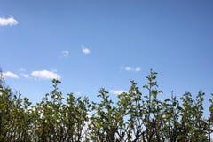 分行明亮的开花的绿色本质春天结构树 叶子和灌木与第一片绿色叶子 库存图片