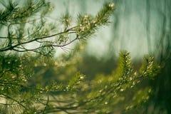 分行明亮的开花的绿色本质春天结构树 库存照片