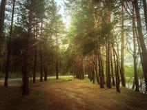 分行明亮的开花的绿色本质春天结构树 免版税库存照片